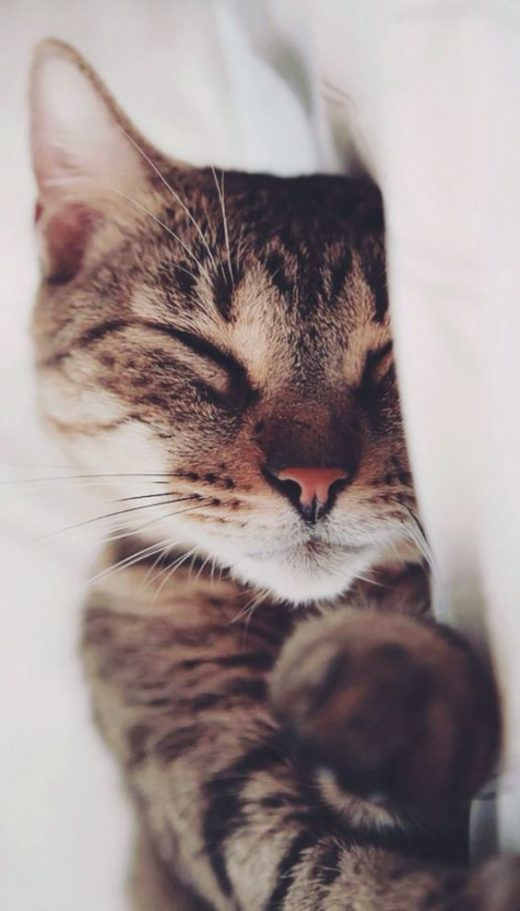 Gatos (15)