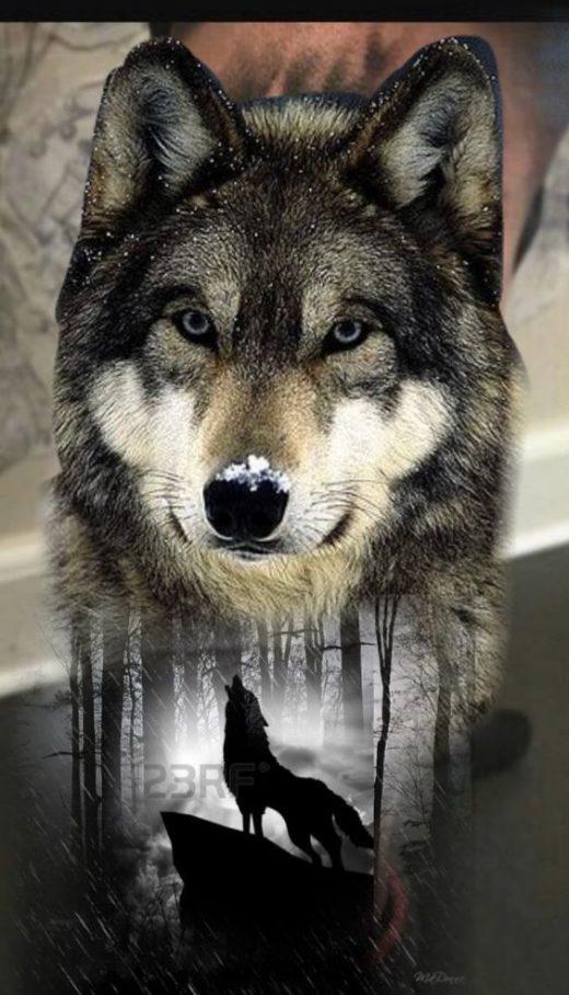 Lobo (15)