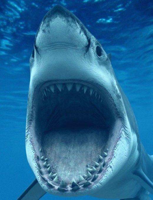 Imagens de tubarão (5)
