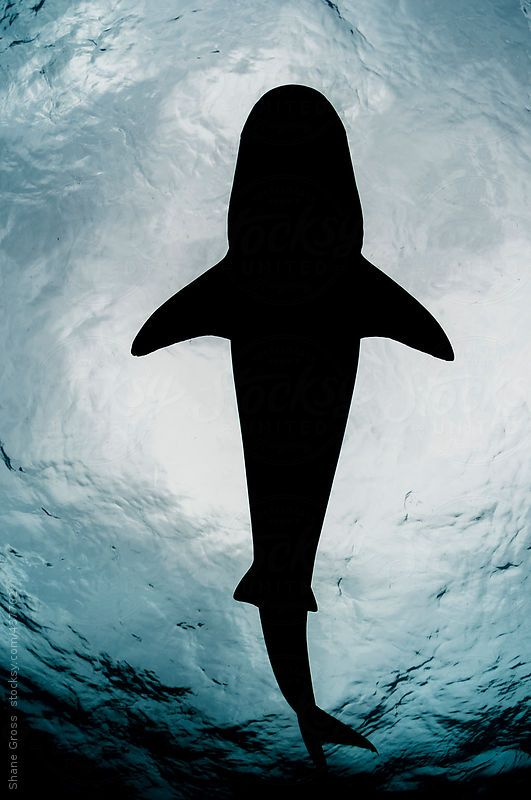 Imagens de tubarão (6)