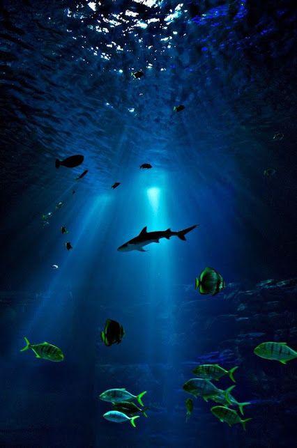 Imagens de tubarão (8)