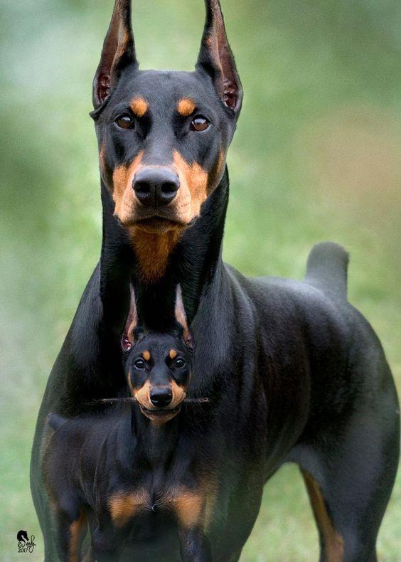 imagens de cachorro (7)