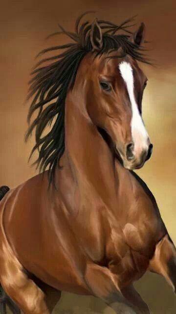 Imagens de Cavalos (6)