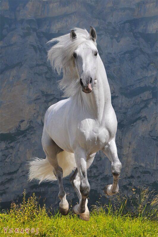 Imagens de Cavalos (9)