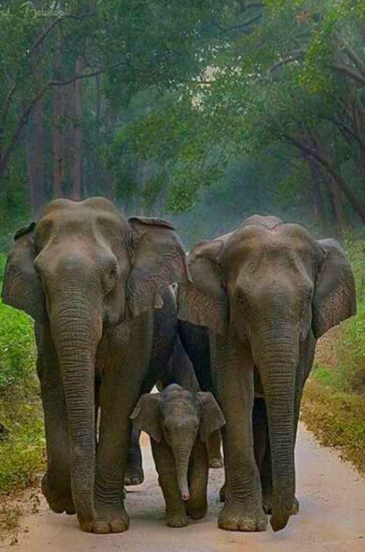 imagens de elefante (2)