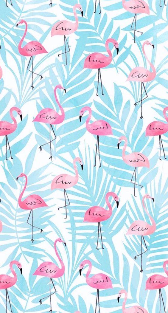 Imagens de Flamingos (7)