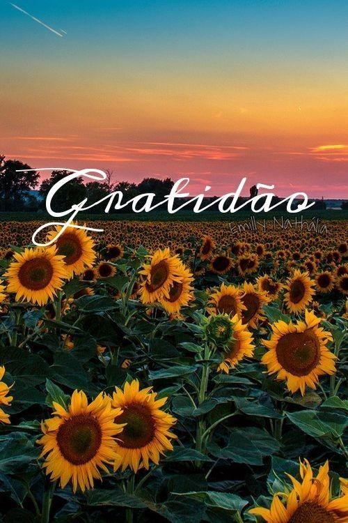 Imagens de gratidão (9)