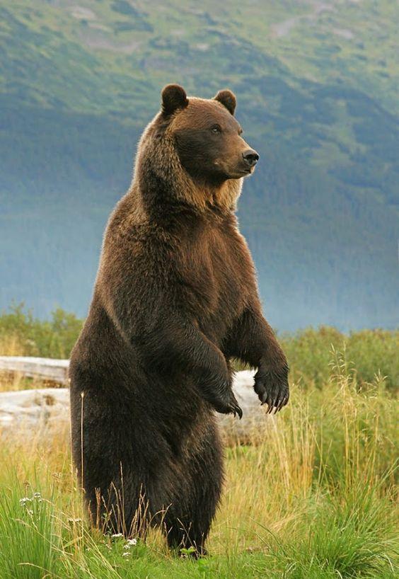 Imagens de Urso (10)