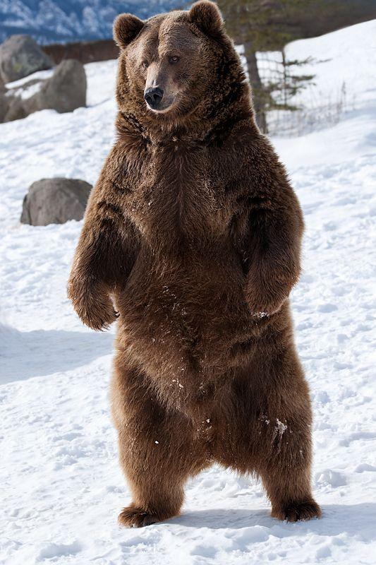 Imagens de Urso (3)