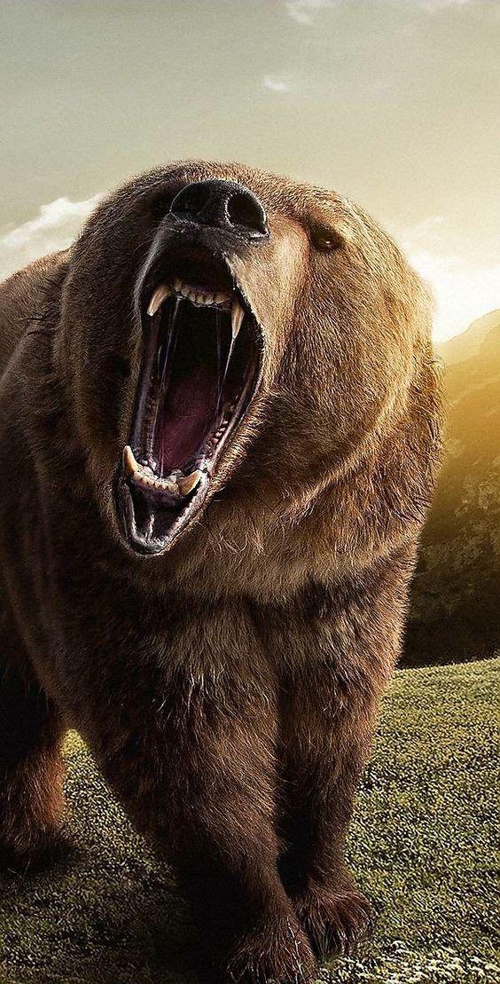 Imagens de Urso (4)