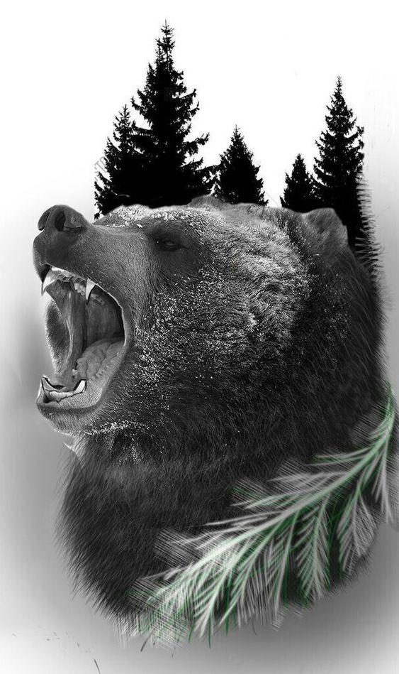 Imagens de Urso (7)